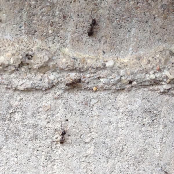 best pest control service ants