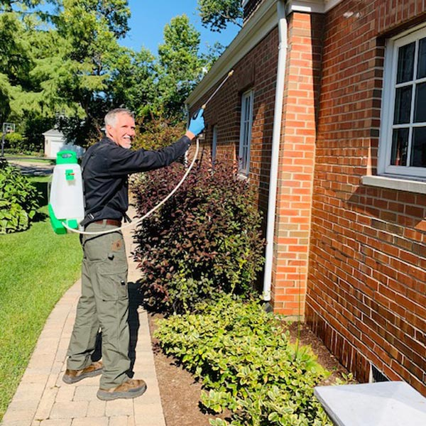 best pest control service bees palatine