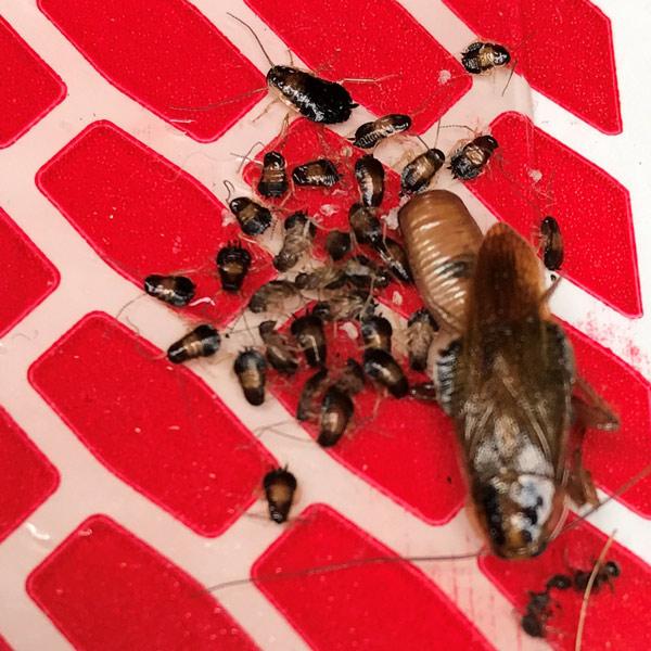 Illinois Bug Identifier