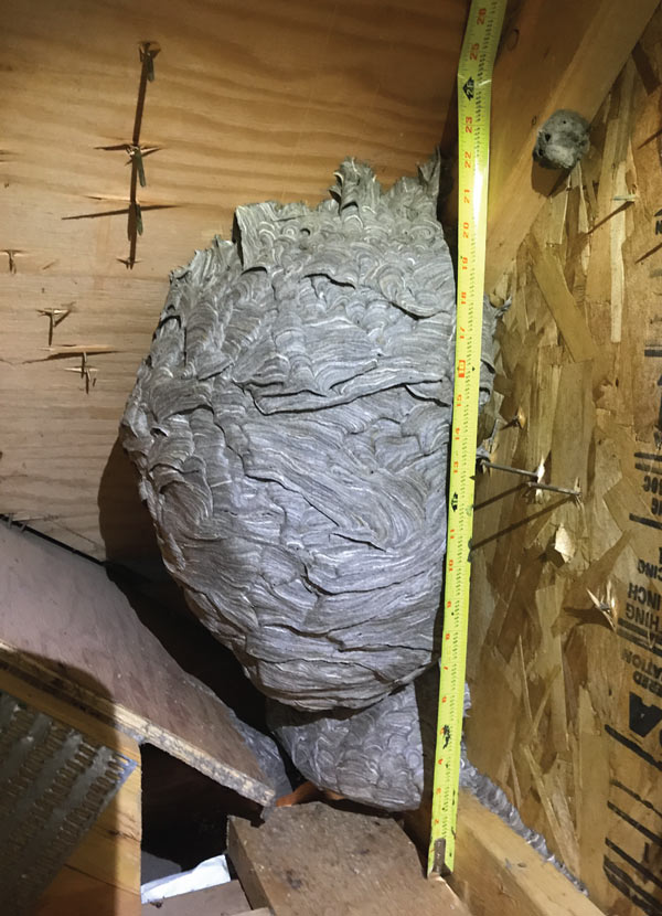 Get rid of bee hive pest control palatine